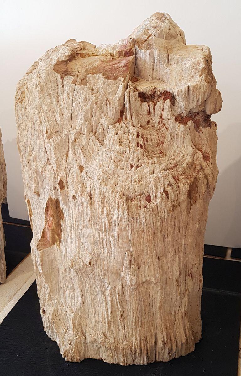 Pierre tombale bois pétrifié 31232