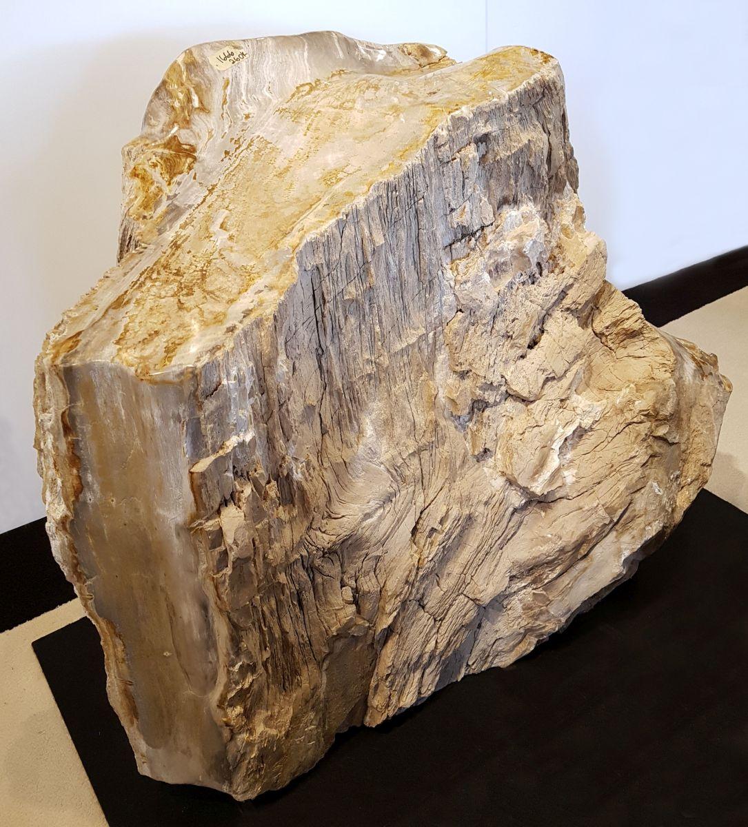 Pierre tombale bois pétrifié 32457
