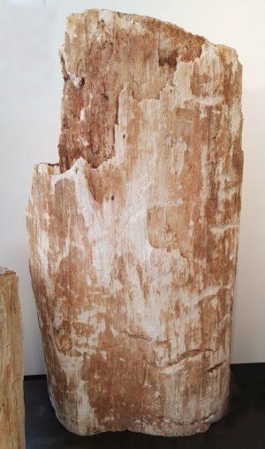 Pierre tombale bois pétrifié 32459