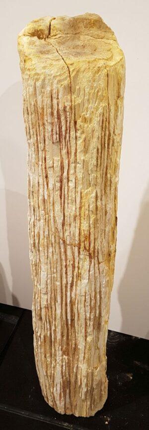 Pierre tombale bois pétrifié 32594