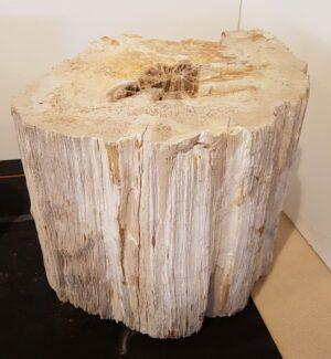 Pierre tombale bois pétrifié 32596