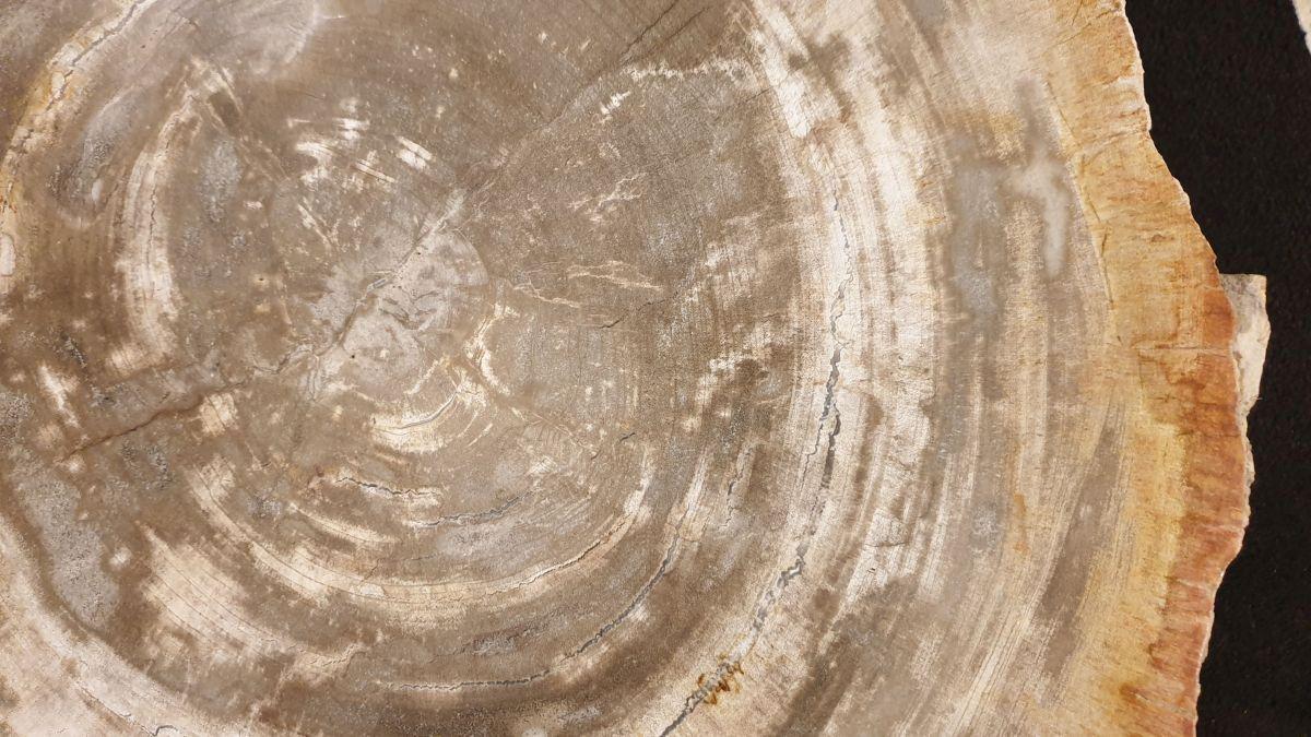 Salontafel versteend hout 32278