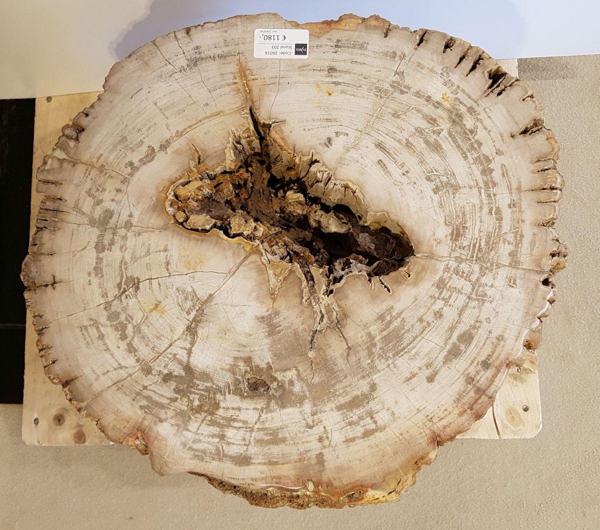 Side table petrified wood 26016