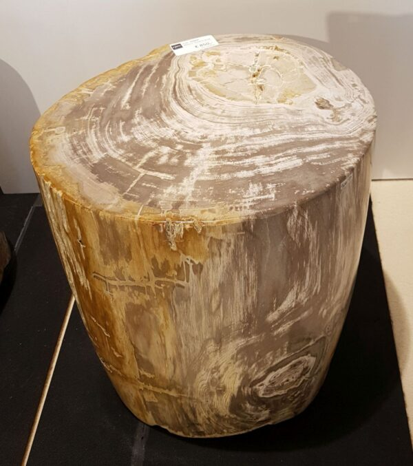Table d'appoint bois pétrifié 26002