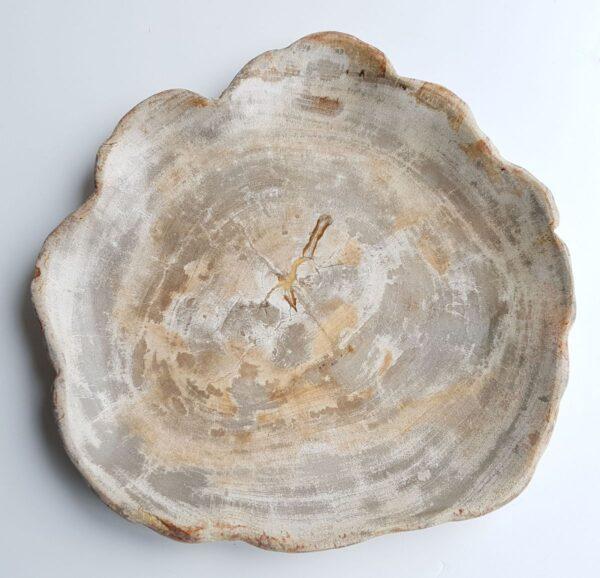 Teller versteinertes Holz 26030