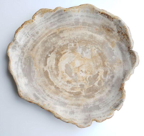 Teller versteinertes Holz 26031