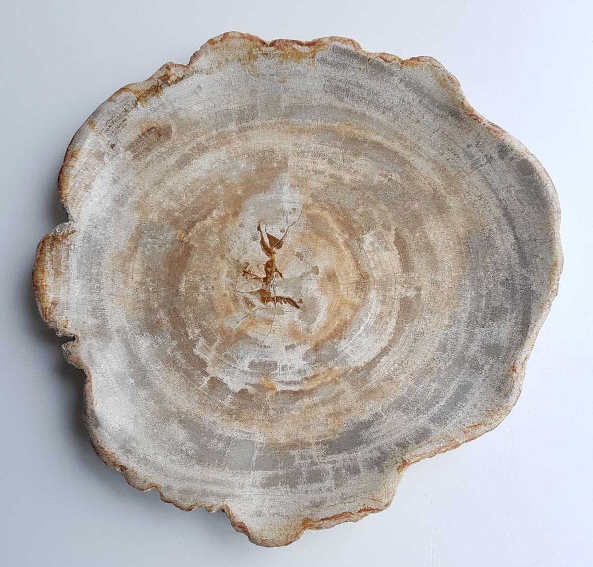 Teller versteinertes Holz 26033