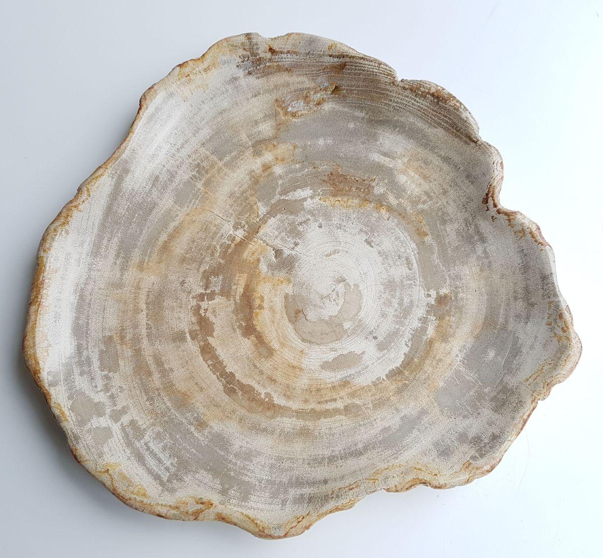 Teller versteinertes Holz 26034
