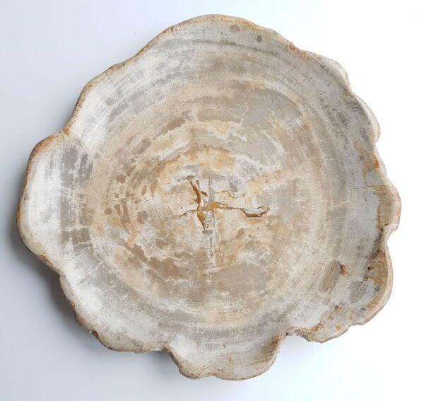Teller versteinertes Holz 26035