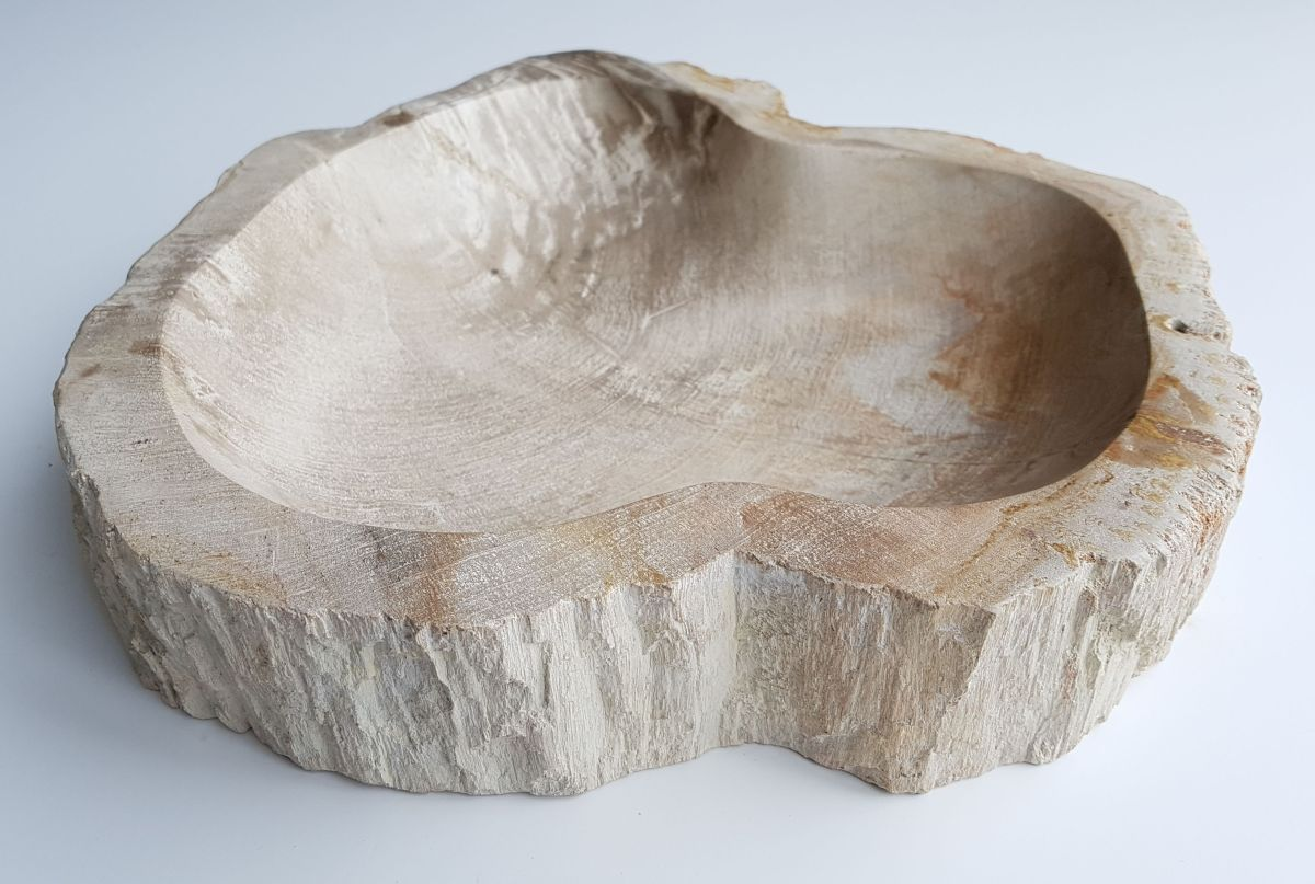 Schale versteinertes Holz 32031