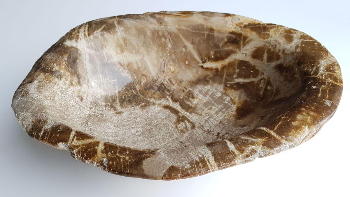 Schale versteinertes Holz 32491