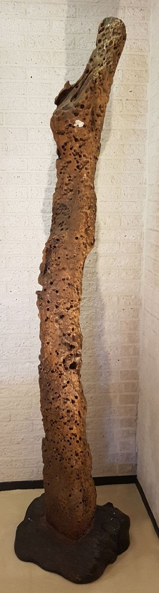 Driftwood 00001