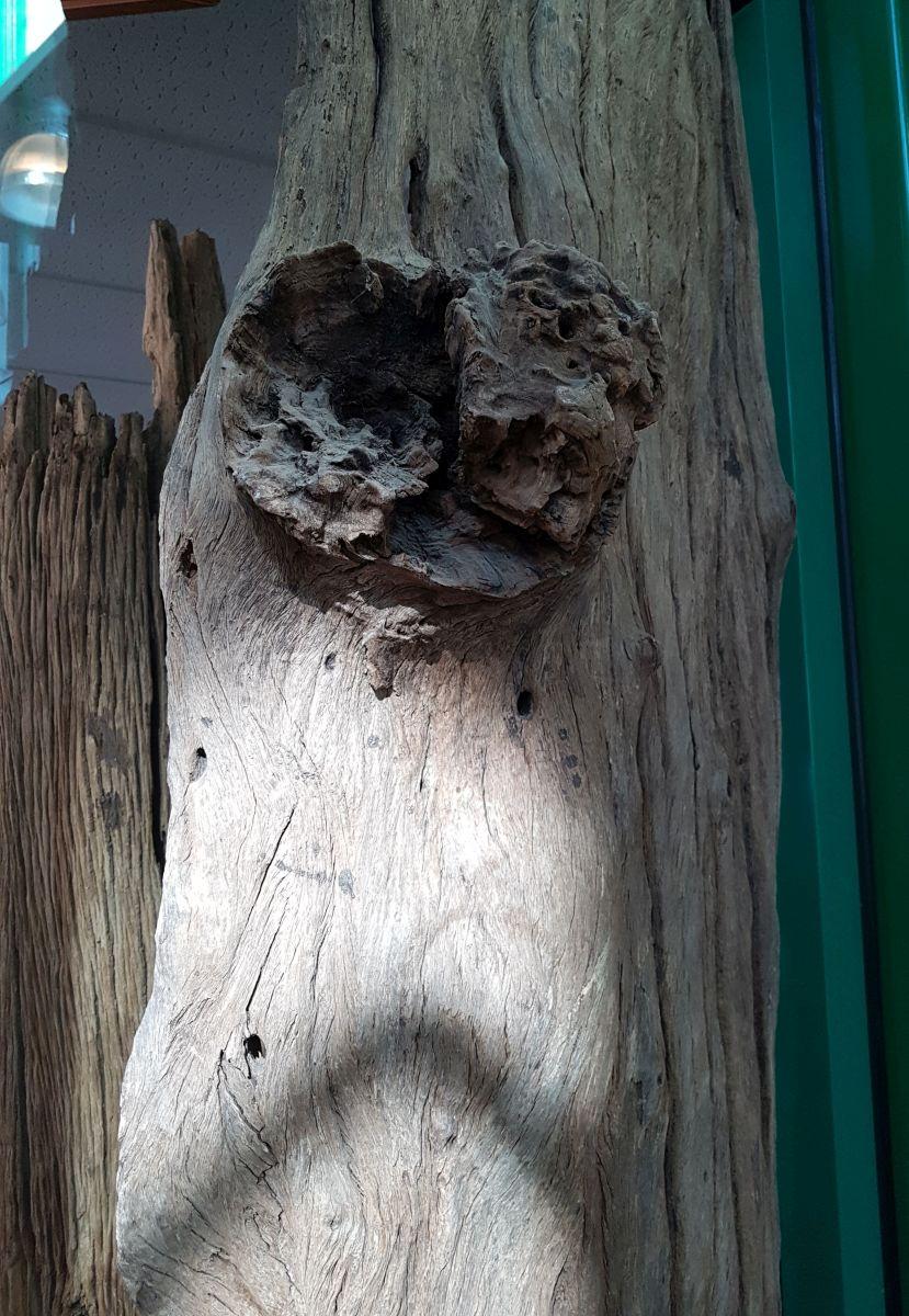 Driftwood 12742