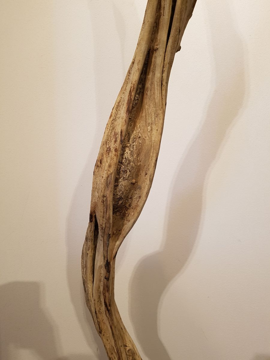 Driftwood 24588B