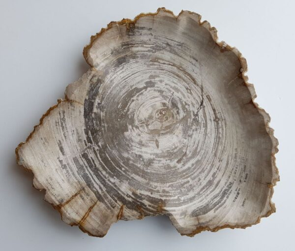 Assiette bois pétrifié 33003b