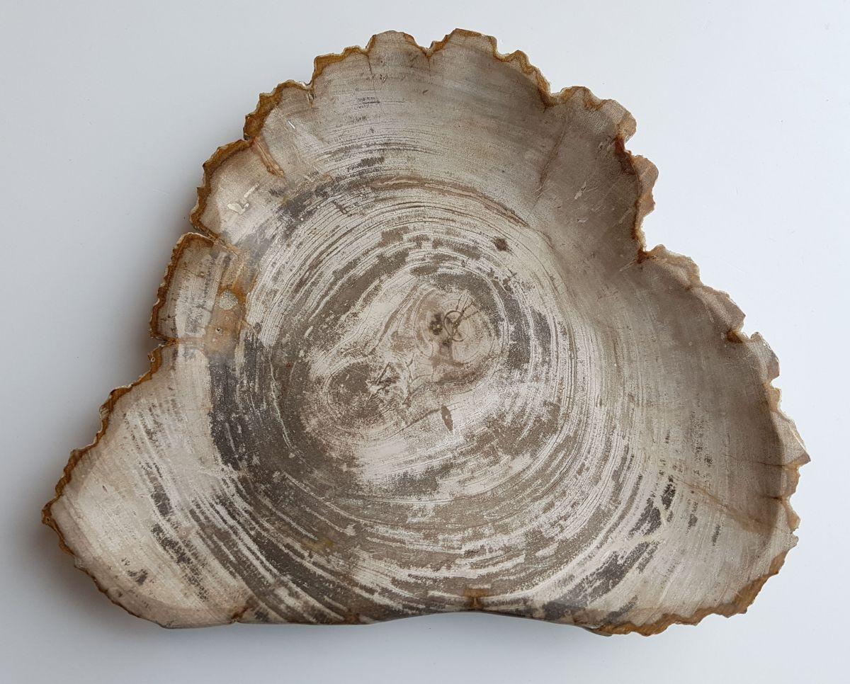 Assiette bois pétrifié 33003c