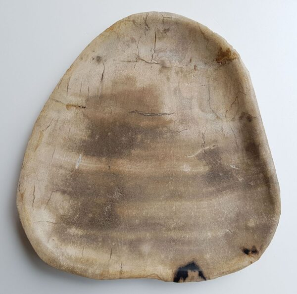 Assiette bois pétrifié 33004f