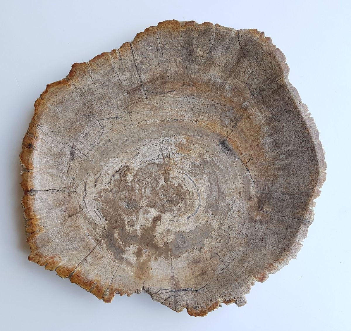 Assiette bois pétrifié 33007b