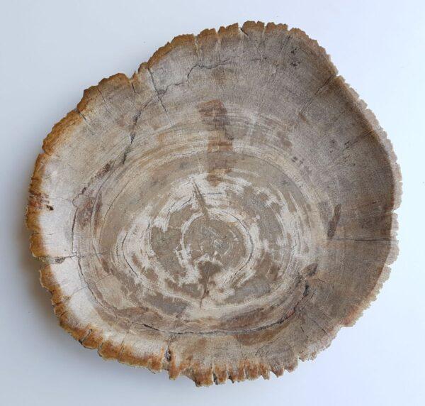 Assiette bois pétrifié 33007c