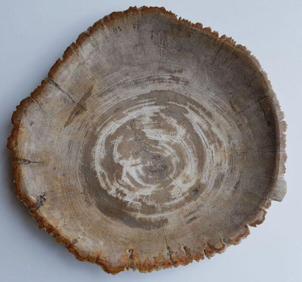 Assiette bois pétrifié 33007m