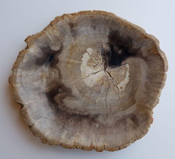 Assiette bois pétrifié 33011a