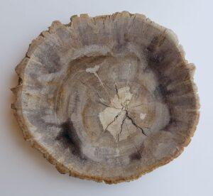 Assiette bois pétrifié 33011e