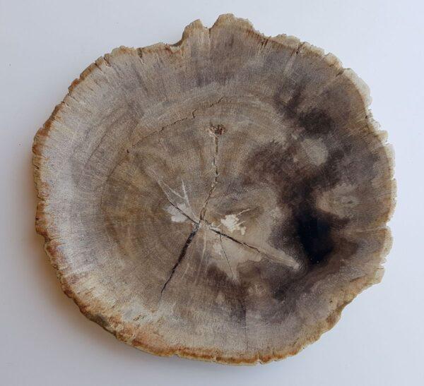 Assiette bois pétrifié 33011f