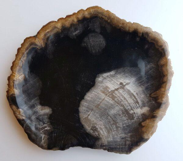 Assiette bois pétrifié 33018c