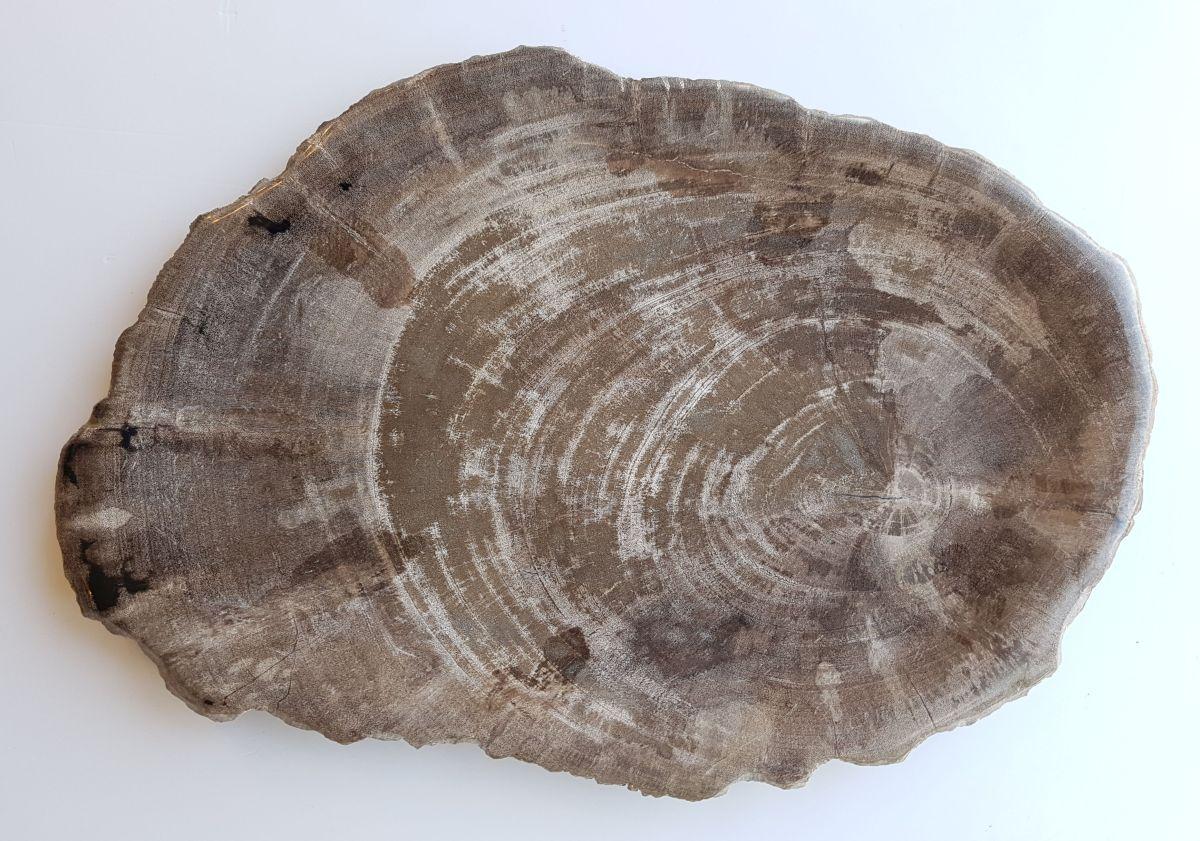 Assiette bois pétrifié 33021b