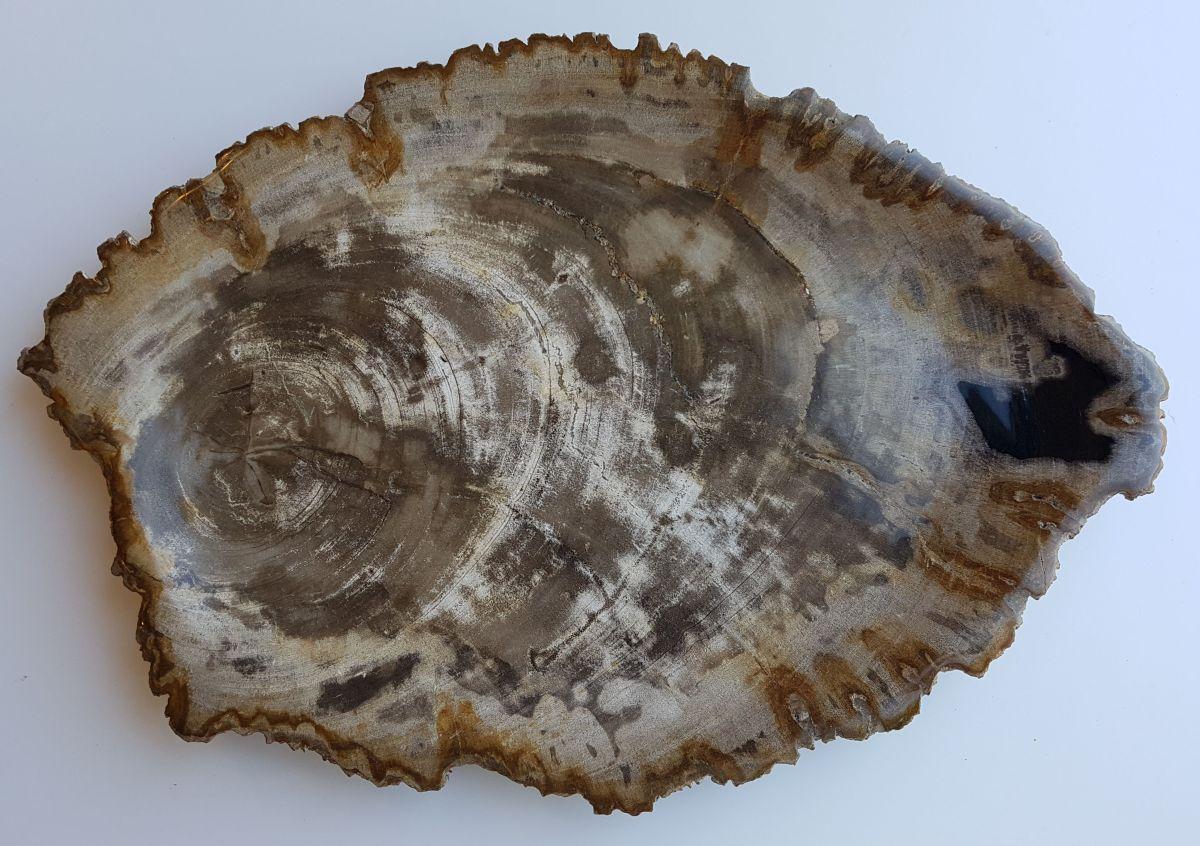 Assiette bois pétrifié 33021i