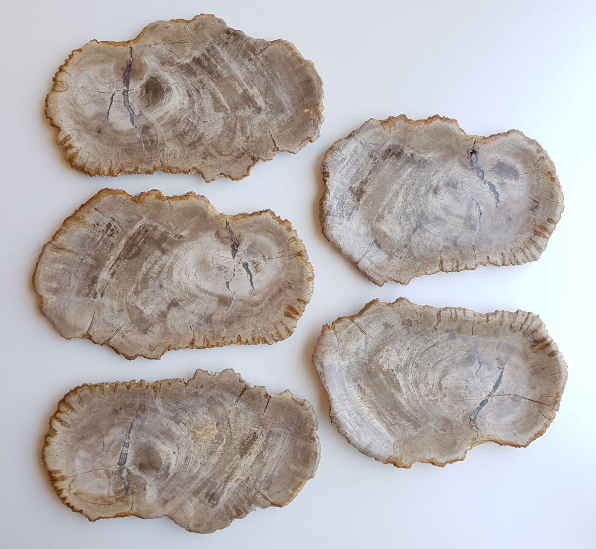 Assiette bois pétrifié 33023b