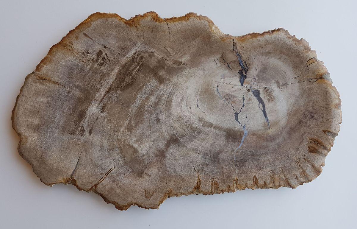 Assiette bois pétrifié 33028