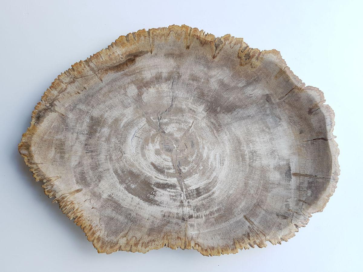 Assiette bois pétrifié 33033e