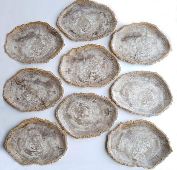 Assiette bois pétrifié 33033g