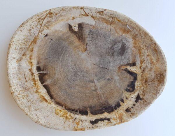 Assiette bois pétrifié 33046b