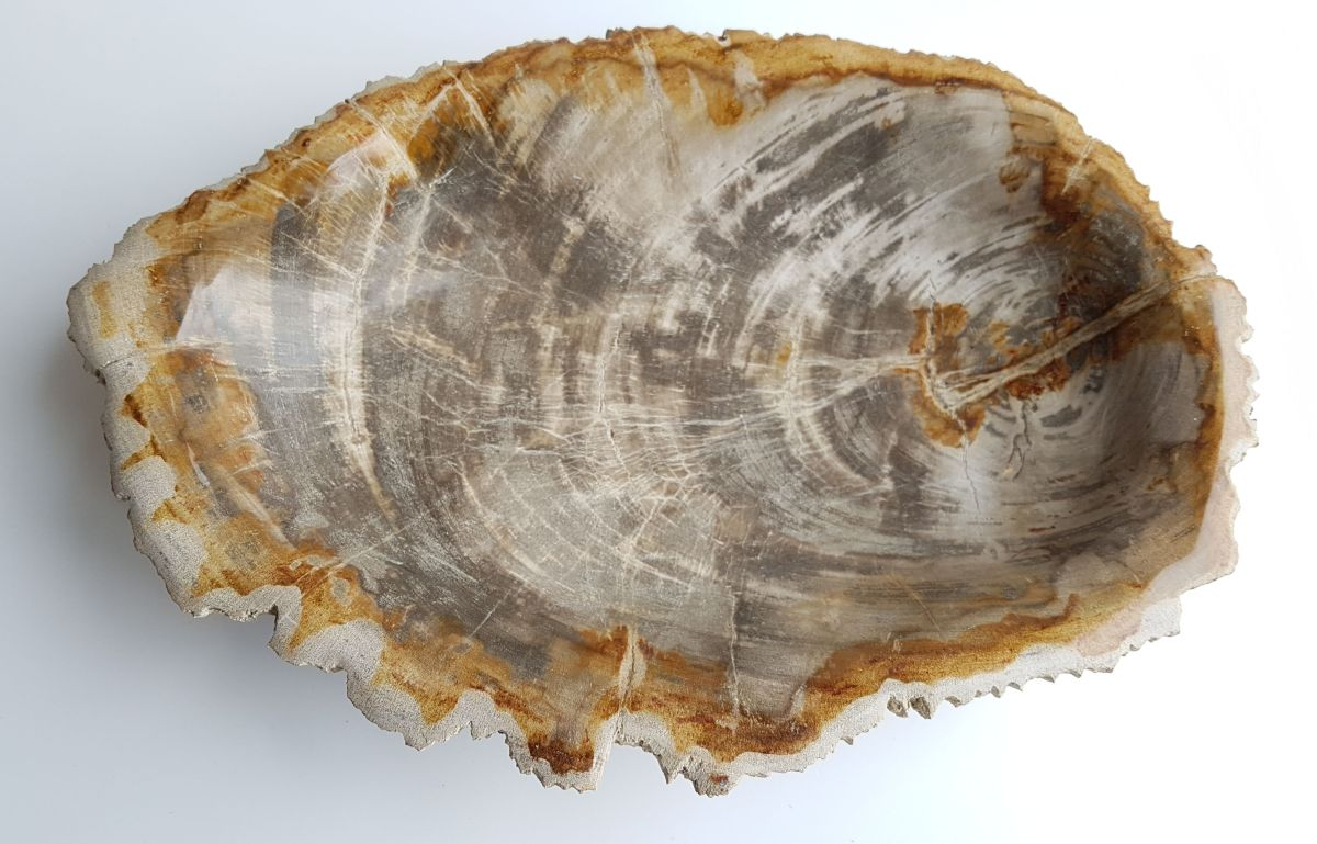 Boule bois pétrifié 33321