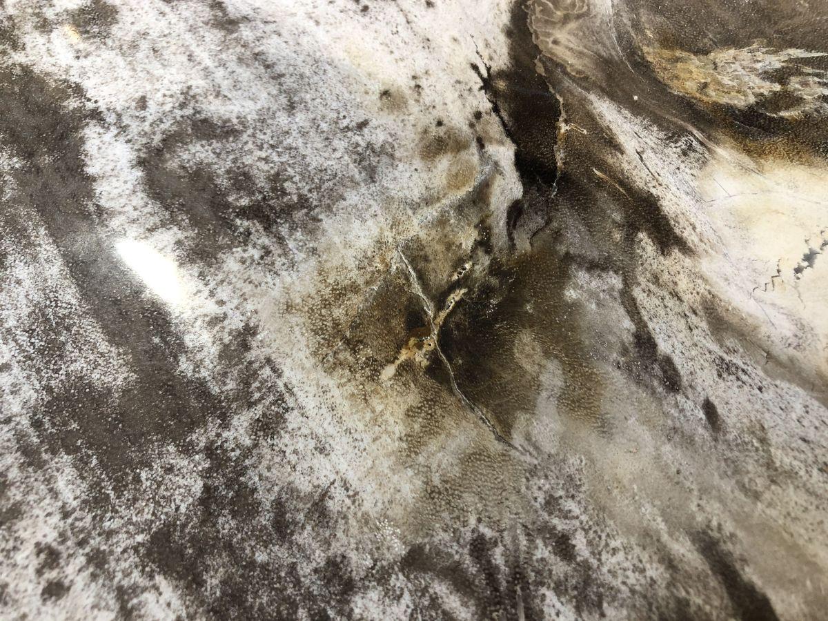 Coffee table petrified wood 33148