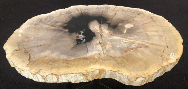 Coffee table petrified wood 33182