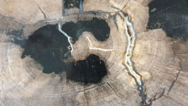 Coffee table petrified wood 33183
