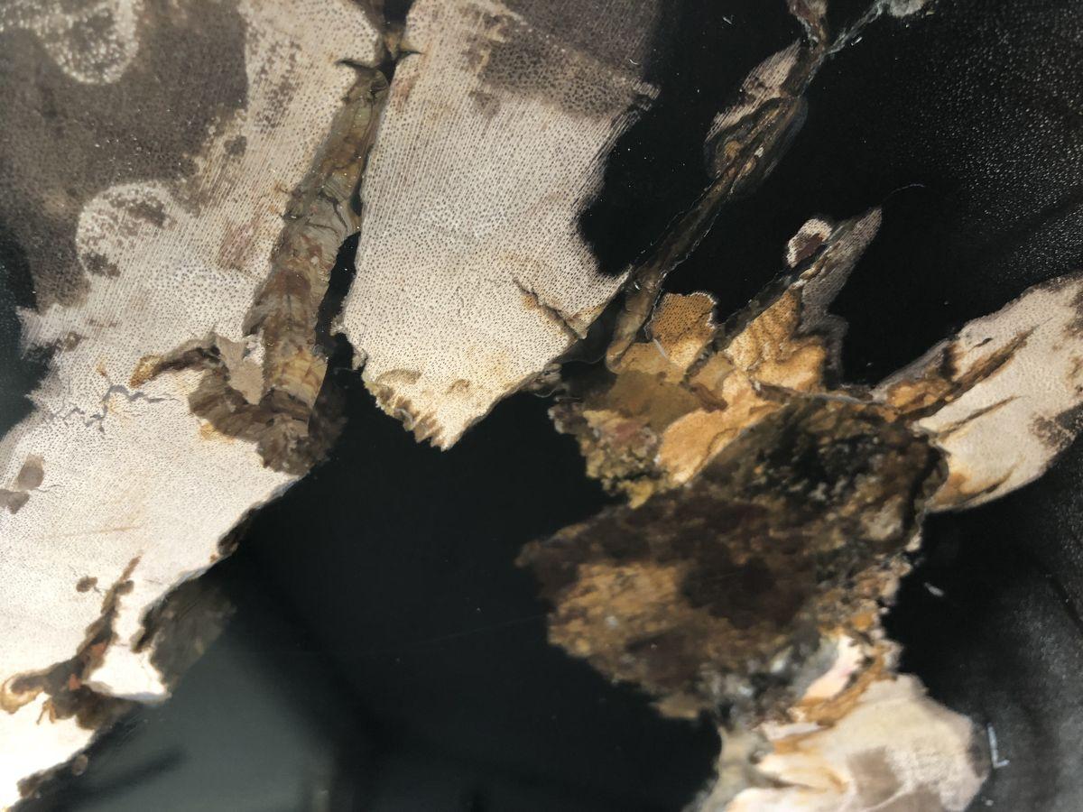 Coffee table petrified wood 33221