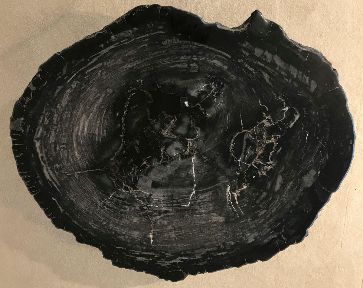 Coffee table petrified wood 33228