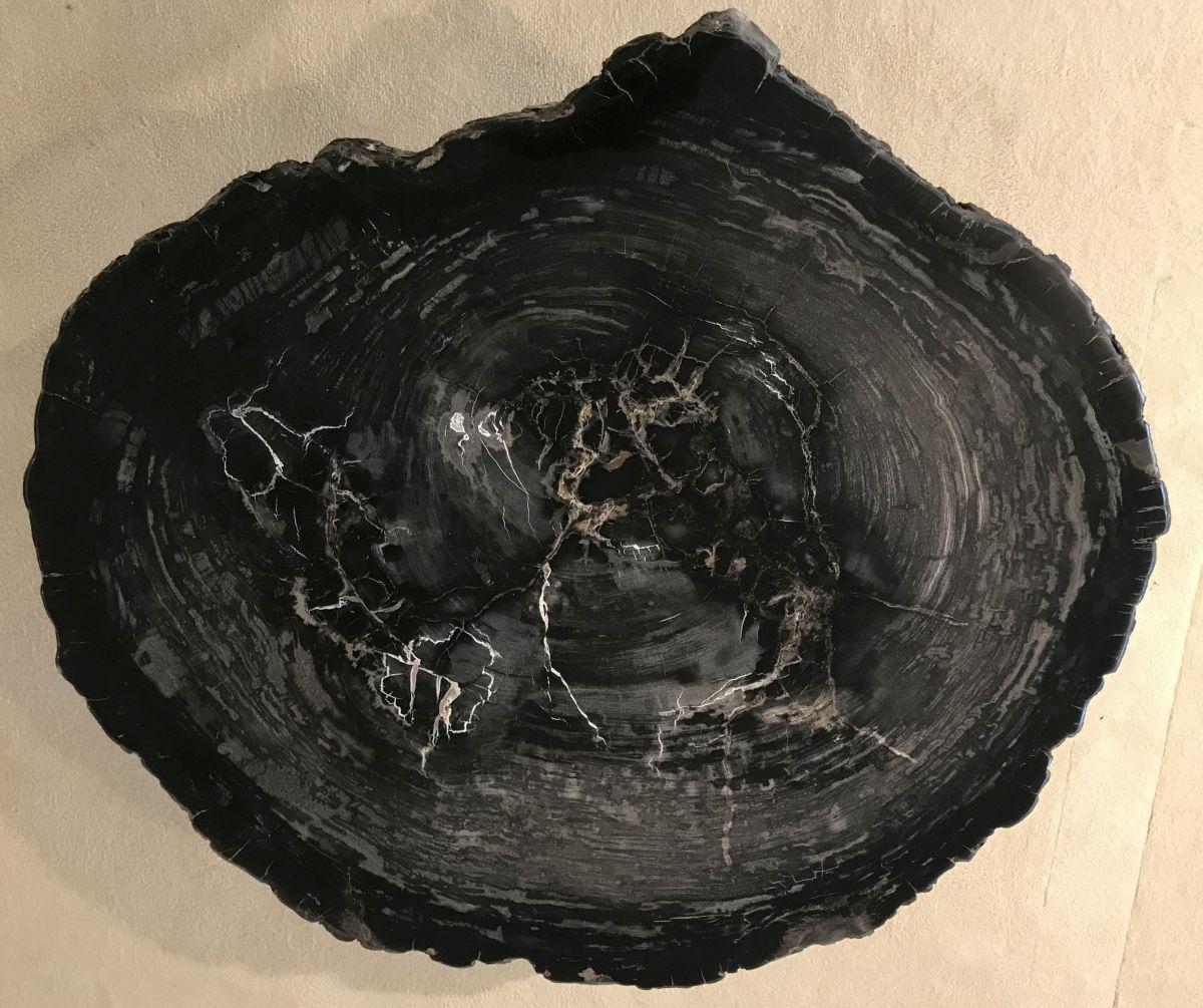 Coffee table petrified wood 33229