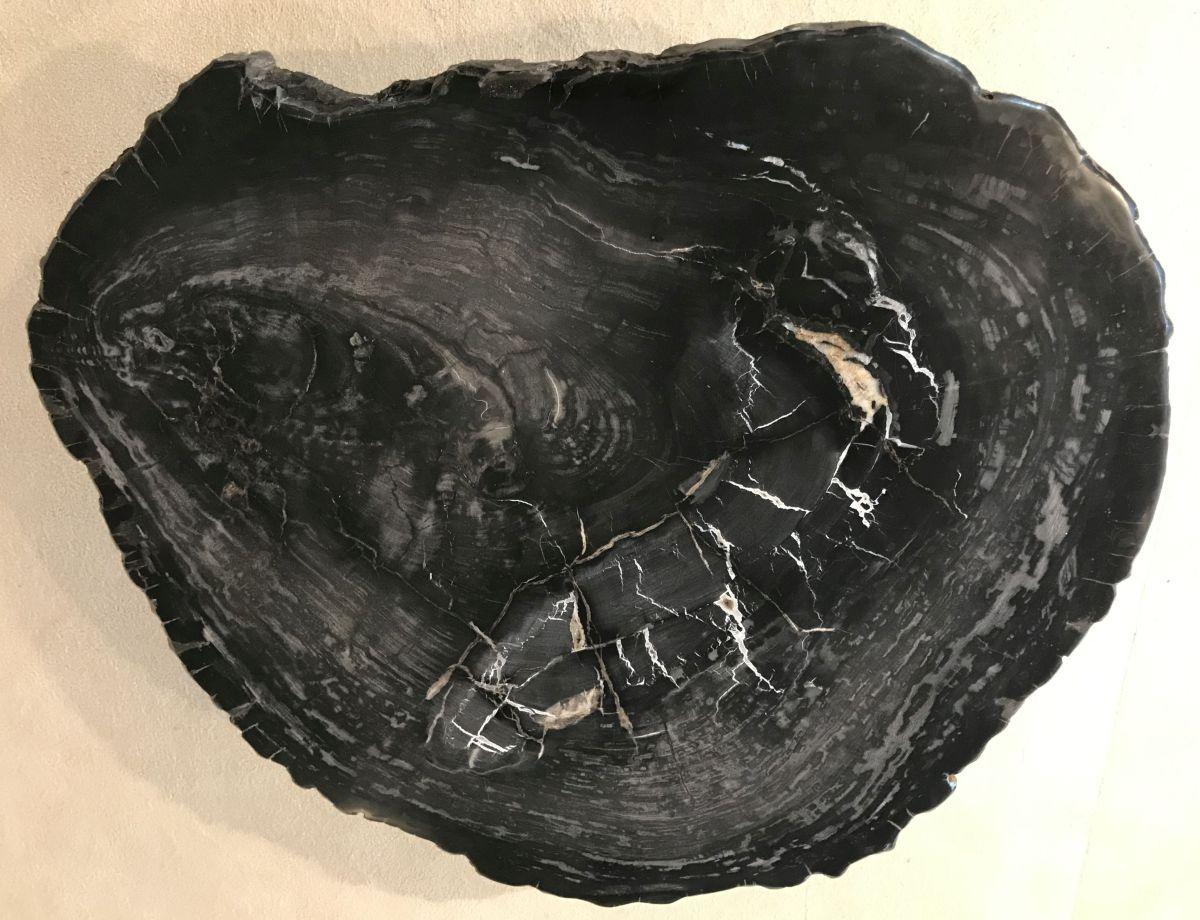 Coffee table petrified wood 33230