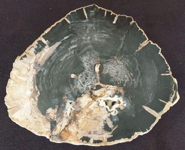 Coffee table petrified wood 33239