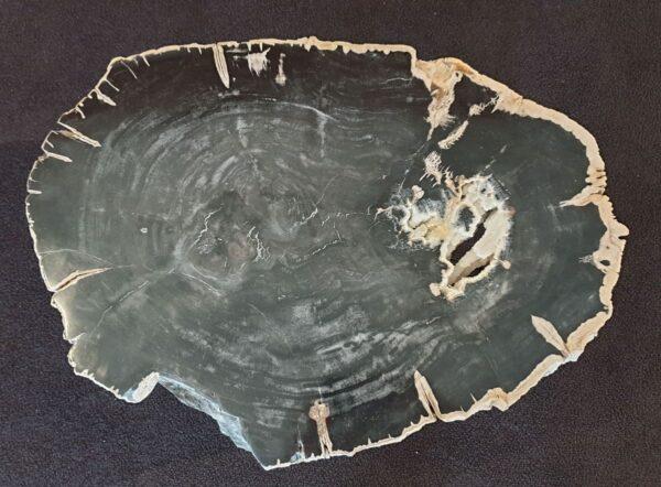 Coffee table petrified wood 33242