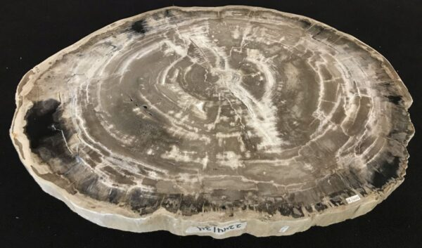 Coffee table petrified wood 33269