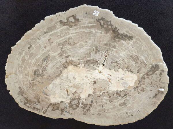 Coffee table petrified wood 33283
