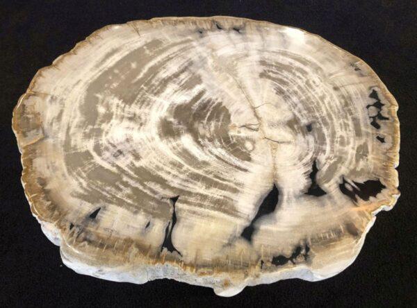 Couchtisch versteinertes Holz 31169