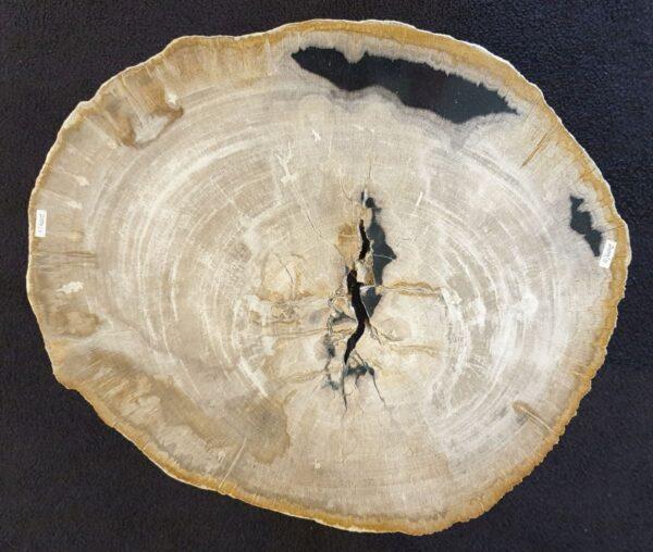 Couchtisch versteinertes Holz 33090