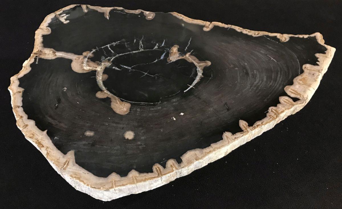 Couchtisch versteinertes Holz 33160